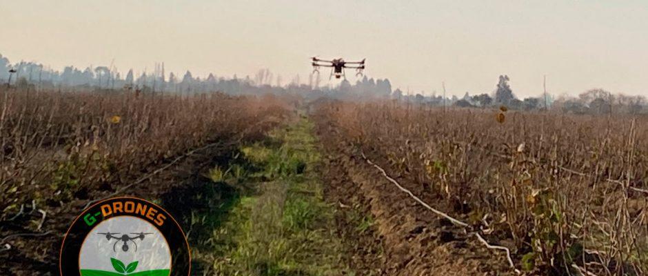 Aplicaciones Fitosanitarias con Drones en la Región del Ñuble